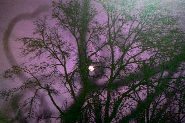 moon thru trees at night